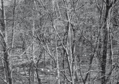 Karen Weinert – aus der Serie: Im Unterholz – Ahrenshoop & Hainich 2013 – Fine-Art-Print – je 30 x 30 cm / 40 x 40 cm
